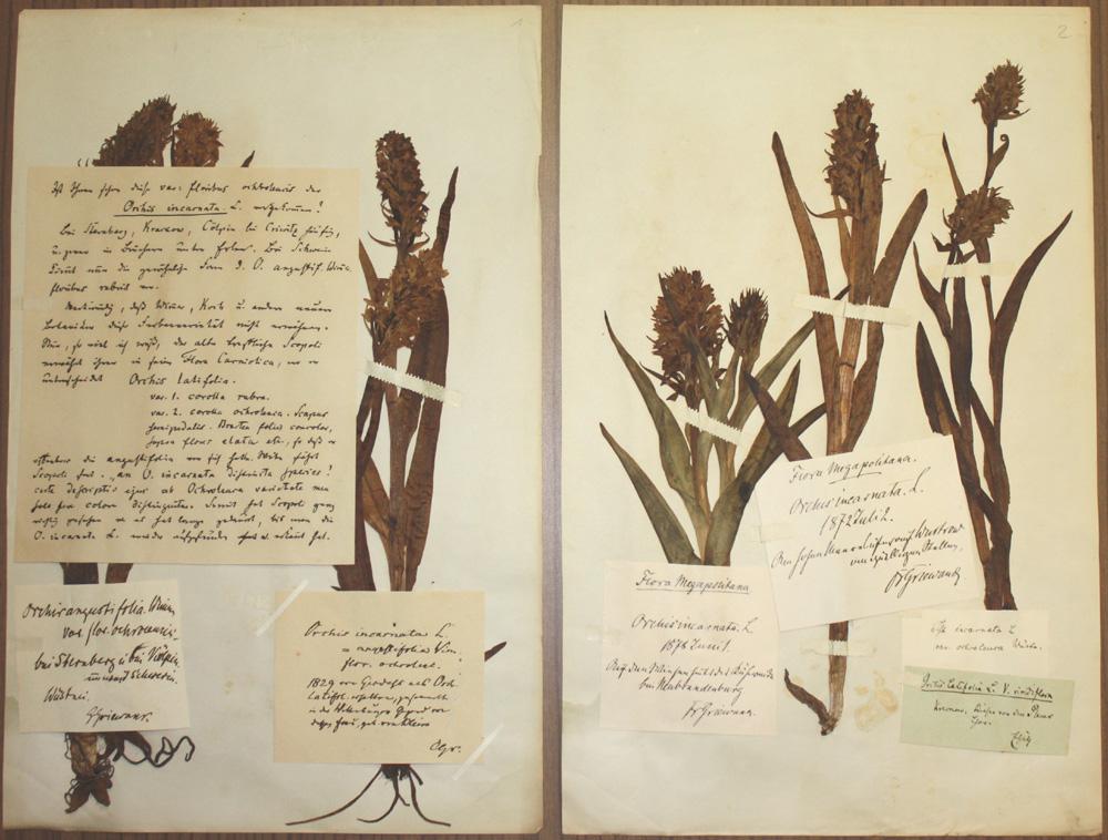 Herbarium Rostochiense (ROST)